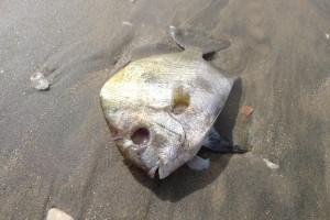 paleo diet dead fish
